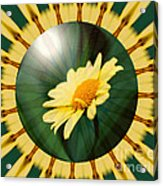 Yellow Daisy Energy Acrylic Print