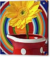 Yellow Daisy In Red Pitcher Acrylic Print by Garry Gay