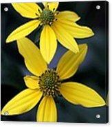 Yellow Duet Acrylic Print