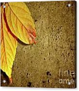 Yellow Fall Leafs Acrylic Print