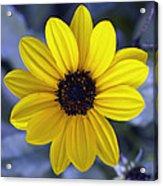 Yellow Flower 4 Acrylic Print
