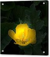 Yellow Flower Against Green Acrylic Print
