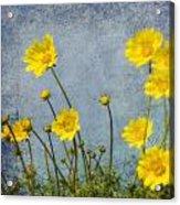 Yellow Flower Blossoms Acrylic Print