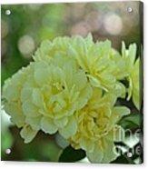 Yellow Flowers Acrylic Print
