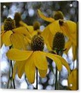 Yellow Flowers Acrylic Print by Naomi Berhane