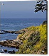 Yellow Flowers On The Central California Coast Acrylic Print