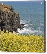 Yellow Flowers On The Northern California Coast Acrylic Print