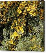 Yellow Flowers On Tree Acrylic Print