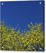 Yellow Flowers Tree Acrylic Print