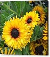 Yellow Garden Acrylic Print