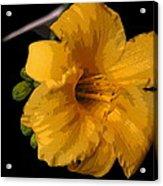 Yellow Glory Acrylic Print