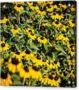 Yellow Golden Flowers 3 Acrylic Print