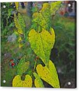 Yellow Heart Leaves IIi Photoart Acrylic Print