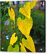 Yellow Heart Leaves  Photoart I Acrylic Print