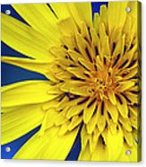 Yellow Heart Acrylic Print