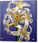Yellow Hyacinth Acrylic Print