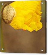 Yellow Icelandic Acrylic Print