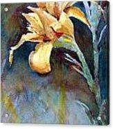 Yellow Iris Acrylic Print by Alan Smith