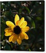 Yellow Jewel Acrylic Print