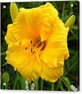Yellow Lily - Oshun Acrylic Print