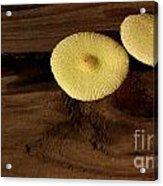 Yellow Mushrooms2 Acrylic Print