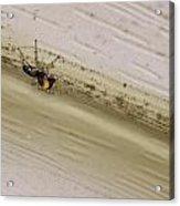 Yellow Palp Spider 1 Acrylic Print