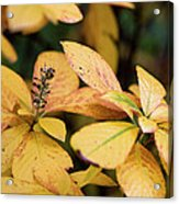 Yellow Petal Leaf With Sprig Acrylic Print