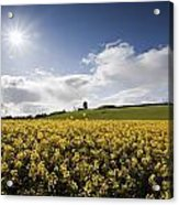 Yellow Rapeseed Field, Newgrange Acrylic Print