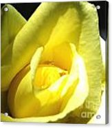Yellow Rose For Love Acrylic Print