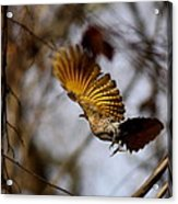 Yellow Shafted Acrylic Print