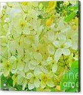 Yellow Shower Tree - 5 Acrylic Print