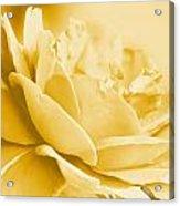 Yellow Tone Rose  Acrylic Print