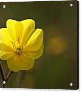 Yellow Wild Flower Acrylic Print