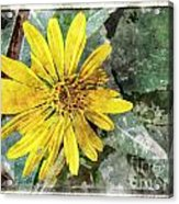 Yellow Wildflower Photoart Acrylic Print