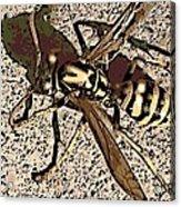 Yellowjacket Acrylic Print