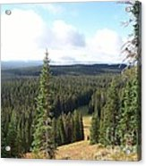 Yellowstone High Elevation Forest Acrylic Print