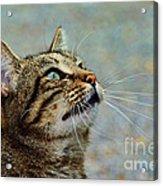 Yes I Am A Pretty Kitty Acrylic Print