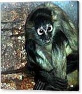 Yoga Monkey Acrylic Print