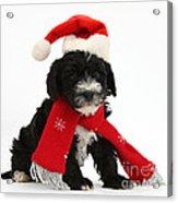 Yorkipoo Pup Wearing Christmas Hat Acrylic Print