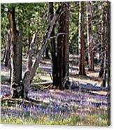 Yosemite Lupin Acrylic Print