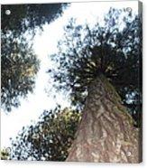 Yosemite Skyline Acrylic Print