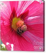 You And Me Are One Said The Bee Acrylic Print