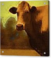 You Can Not Cow Me Acrylic Print