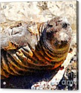 Young Elephant Seal  . 7d16091 Acrylic Print by Wingsdomain Art and Photography