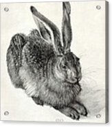 Young Hare, By Durer Acrylic Print