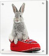 Young Silver Rabbit In A Knitted Slipper Acrylic Print