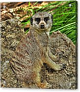 Your Invading My Space Acrylic Print
