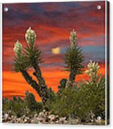 Yucca Blooming Sunset-moonset Acrylic Print