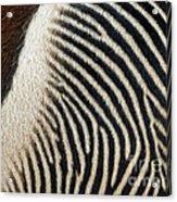 Zebra Caboose Acrylic Print