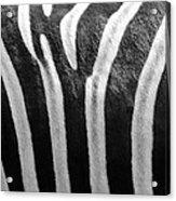 Zebra Print Acrylic Print